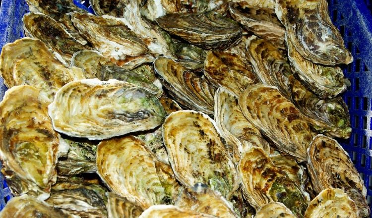 Franse Oesters_Pixabay